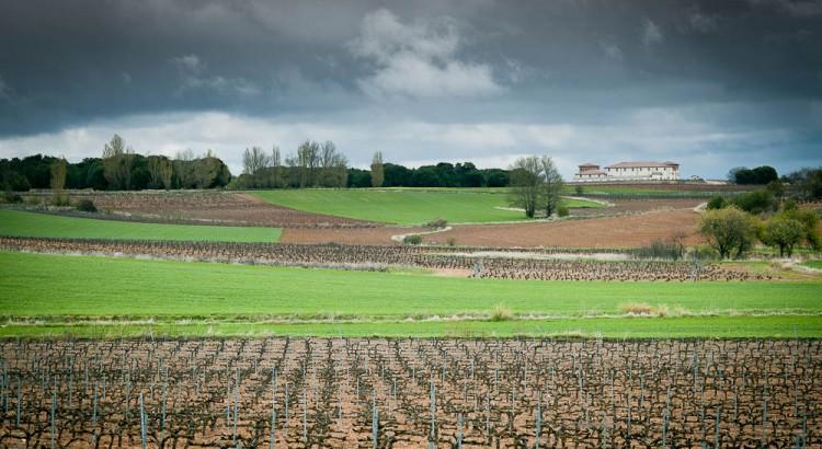 Denominaciones de Origen Vinos España: D.O Ribera del Duero